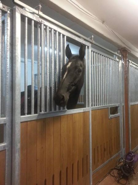 koně v novém
